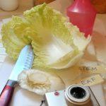 10 Percobaan Menarik Tentang Tumbuhan