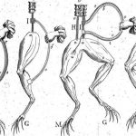 Percobaan Listrik Frankenstein Tahun1800-an